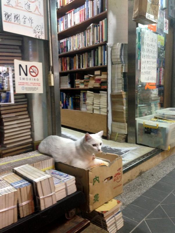Book Shop Cat, Taipei, Taiwan