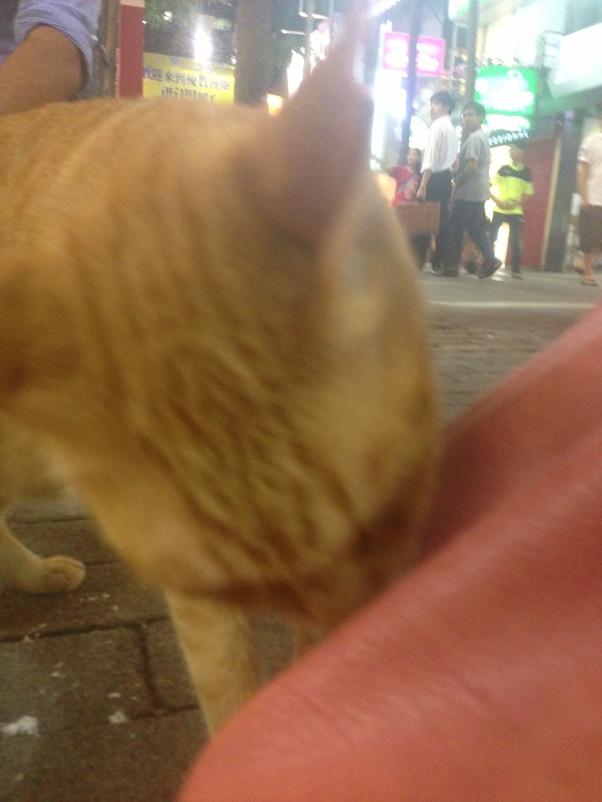 Curious Cat, Taipei, Taiwan