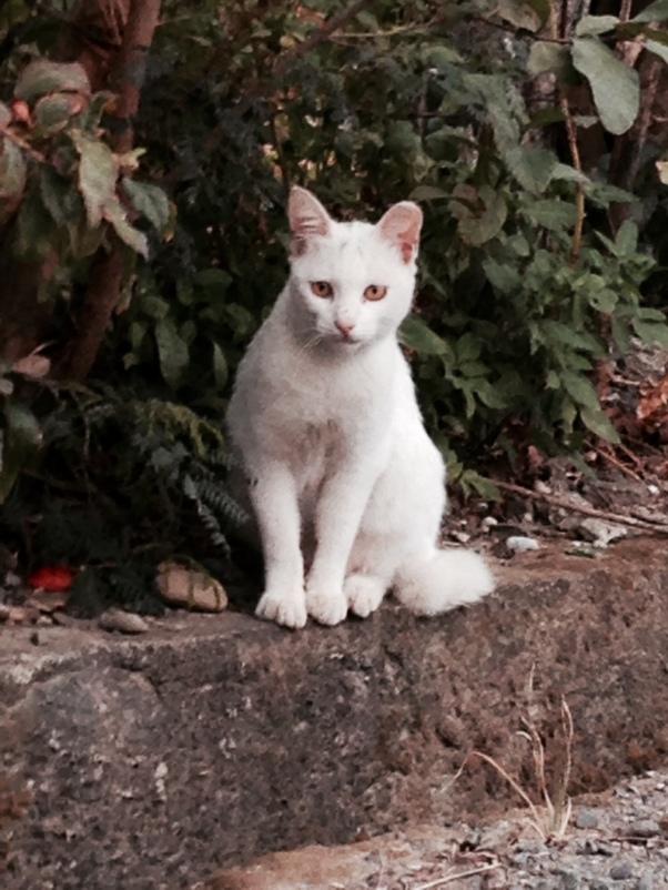 cat look book kenting